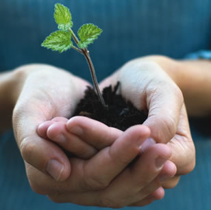 Hands planter