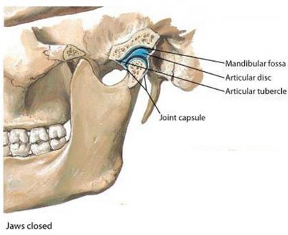 Lateral Temporomandibular Joint (TMJ) Joint Capsule